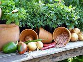 Gardeners Joy