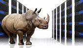 rinoceronte em data centers com lotes de servidor
