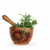 picture of hyssop  - Hyssop herb leaves in an olive wood mortar with pestle over white background - JPG