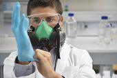 Постер, плакат: Мужской ученый в противогаз во время надеть резиновые перчатки в лаборатории