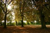 Autumn Day I