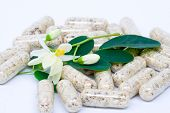image of malunggay  - flowers Leaves and Capsule of Moringa on white - JPG