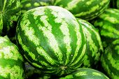 bright green watermelons as summer background