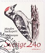 Woodpecker Stamp