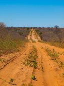 Endless Sandy Road Of Chobe