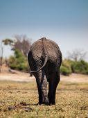 Elephant Leaving
