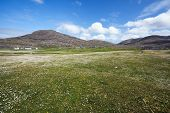 Flowery Meadow. Isle Of Barra, Outer Hebrides, Scotland.
