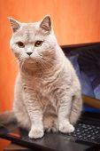 Cat On A Laptop