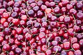 Placer ripe cherries