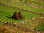 Rural Landscape. Tapered Haystacks On Green Grass Ground poster