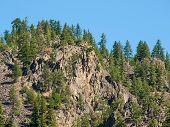 Evergreen Trees On A Steep, Rocky Mountainside In Montana Usa