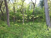 Young and next generation of trees in spring at Starved Rock State Park