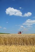 Agriculture, Wheat Harvest With Combine