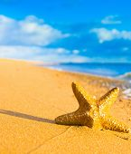 picture of starlet  - Sea Starlet Natural Details  - JPG