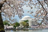 Jefferson Memorial during Cherry Blossom Festival - Washington DC, United States of America