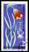 Vintage  Postage Stamp. Flower Fritillaria Drenovskyi.