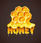 Honey in honeycombs. Eps10 vector illustration.