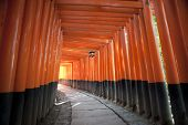 stock photo of inari  - Tunnel of red torii gates at the Fushimi Inari - JPG