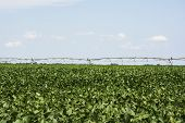 Soya Field With Huge Irrigation System