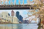 East River Manhattan and Queensborough Bridge during cherry blossom.