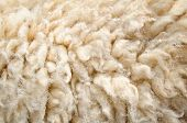 Sheep Wool Skin