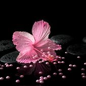 Beautiful Spa Setting Of Delicate Pink Hibiscus, Zen Stones With Drops And Pearl Beads On Water,  Cl