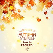 Beautiful autumn background with maple autumn leaves