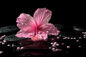 Beautiful Spa Setting Of Delicate Pink Hibiscus, Zen Stones With Drops And Pearl Beads On Ripple Wat