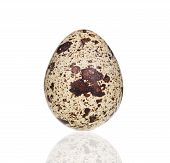 Single quail egg.