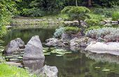 Fragment Of A Japanese Garden