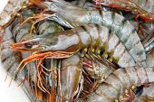 stock photo of tiger prawn  - Big pile of fresh seafood crustaceans tiger prawns - JPG