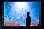 Silhouette Of A Boy In Front Of An Aquarium Full Of Fish