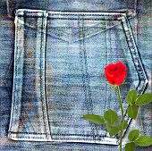 Beautiful Red Rose On Old Jeans Background