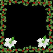 Holly and Poinsettia Border Over Black