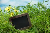 Empty text board in a meadow with grass and clover