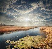 Quiet Reedy River