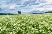 Vibrant Springtime Plain Nature