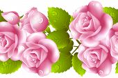 picture of english rose  - Seamless background with rose roses - JPG