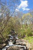 spring landscape with Vyrovka brook, Czech Republic