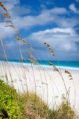 Beautiful beach at Bahamas Harbour island