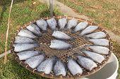 fresh prepare raw fish