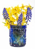 Little spring bouquet of forsythia and muscari.