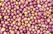 Purple Olives
