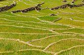 Rice field terraces (rice paddy). Near Cat Cat village, near Sapa, Mui Ne