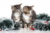 Kittens In Christmas Decoration On White Background