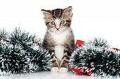 Kitten in Christmas Garland