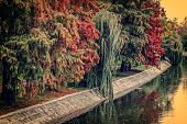 Vintage Look With Trees In Autumn On The River Shore