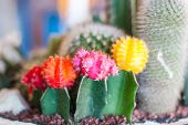 Beautiful Cactus Flower Image At The Gardens