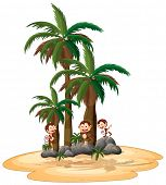 Three monkies playing under coconut trees