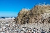 Dune On Shore